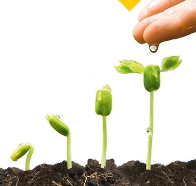 Aus Samen wird eine Planze durch Gießen